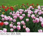 Купить «Тюльпаны», фото № 351504, снято 20 мая 2007 г. (c) Молчанова Юлия / Фотобанк Лори