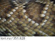 Кожа змеи, фон. Стоковое фото, фотограф Tyurina Ekaterina / Фотобанк Лори