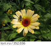 Купить «Календула, муха и паук», фото № 352036, снято 6 июля 2008 г. (c) Марат Кабиров / Фотобанк Лори
