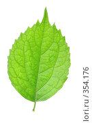 Купить «Зеленый лист», фото № 354176, снято 28 января 2020 г. (c) Роман Сигаев / Фотобанк Лори