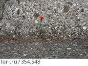 Купить «Заблудившийся», фото № 354548, снято 3 июля 2008 г. (c) Максим Купрацевич / Фотобанк Лори