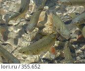 Купить «Рыбы в прозрачной воде», фото № 355652, снято 7 июля 2005 г. (c) Татьяна Заварина / Фотобанк Лори