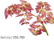 Купить «Декоративное растение», фото № 356780, снято 14 ноября 2018 г. (c) Олег / Фотобанк Лори