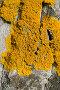 Мох на текстуре коры дерева, фото № 357404, снято 29 октября 2016 г. (c) Александр Fanfo / Фотобанк Лори