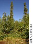 Купить «Лесные великаны», фото № 359864, снято 14 июля 2008 г. (c) Владимир Тимошенко / Фотобанк Лори