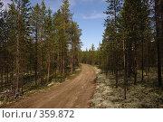 Купить «Лесная дорога», фото № 359872, снято 15 июля 2008 г. (c) Владимир Тимошенко / Фотобанк Лори