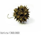 Купить «Сухое растение», фото № 360060, снято 16 июня 2008 г. (c) Дмитрий Иванов / Фотобанк Лори