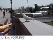 Купить «Белый голубь», фото № 360976, снято 8 июля 2008 г. (c) Антон Щербина / Фотобанк Лори
