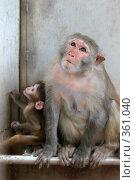 Купить «Мартышка с детенышем», фото № 361040, снято 24 октября 2007 г. (c) Gagara / Фотобанк Лори