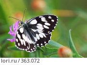 Купить «Бабочка на цветке», фото № 363072, снято 27 июня 2008 г. (c) Sergey Toronto / Фотобанк Лори
