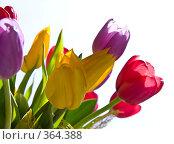 Букет из тюльпанов. Стоковое фото, фотограф Ольга Ковальчук / Фотобанк Лори