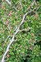 Цветущее дерево, эксклюзивное фото № 364768, снято 24 апреля 2008 г. (c) Дмитрий Неумоин / Фотобанк Лори