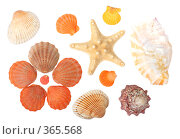 Купить «Морские раковины», фото № 365568, снято 1 мая 2008 г. (c) Pshenichka / Фотобанк Лори