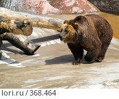 Купить «Бурый медведь (Ursus arctos)», фото № 368464, снято 3 июля 2008 г. (c) Михаил Крекин / Фотобанк Лори