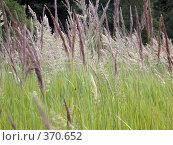 Купить «Трава. Фон», фото № 370652, снято 13 июля 2007 г. (c) sav / Фотобанк Лори