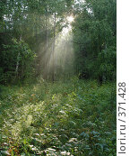 Купить «Оленьи ручьи», фото № 371428, снято 7 августа 2004 г. (c) Павел Мурадов / Фотобанк Лори