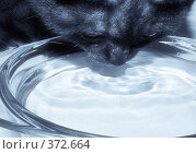 Купить «Кот в холодных тонах», фото № 372664, снято 5 июля 2008 г. (c) Максим Камалов / Фотобанк Лори