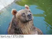 Купить «Бурый медведь в зоопарке», фото № 373056, снято 26 июля 2008 г. (c) Екатерина Овсянникова / Фотобанк Лори