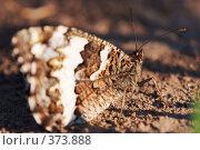 Купить «Бабочка на земля», фото № 373888, снято 29 июня 2008 г. (c) Sergey Toronto / Фотобанк Лори