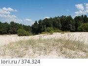 Купить «За песчаными дюнами бор», фото № 374324, снято 26 июля 2008 г. (c) Андрей Рыбачук / Фотобанк Лори