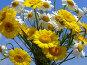 Букет белых и желтых полевых ромашек, эксклюзивное фото № 374344, снято 13 июля 2008 г. (c) lana1501 / Фотобанк Лори
