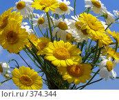 Купить «Букет белых и желтых полевых ромашек», эксклюзивное фото № 374344, снято 13 июля 2008 г. (c) lana1501 / Фотобанк Лори