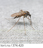 Купить «Комар», фото № 374420, снято 15 января 2019 г. (c) pzAxe / Фотобанк Лори