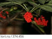 Лесная ягода. Стоковое фото, фотограф Михаил Ерченко / Фотобанк Лори