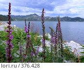 Купить «Цветы и море», фото № 376428, снято 9 сентября 2007 г. (c) Анна Янкун / Фотобанк Лори