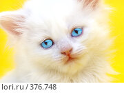 Купить «Голубоглазый котенок», фото № 376748, снято 28 марта 2007 г. (c) Андрей Армягов / Фотобанк Лори