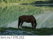 Купить «Лошадь на фоне озера, в котором отражается гора», фото № 378252, снято 26 июня 2008 г. (c) Абдурагимова Наталия / Фотобанк Лори