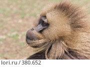 Купить «Бабуин, самец», фото № 380652, снято 7 мая 2008 г. (c) Александр Волков / Фотобанк Лори