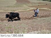 Ручная вспашка земли, Эфиопия (2008 год). Редакционное фото, фотограф Александр Волков / Фотобанк Лори