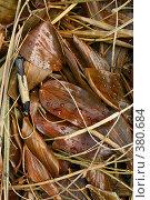 Купить «Мокрые листья с каплями воды», фото № 380684, снято 26 июля 2008 г. (c) Татьяна Заварина / Фотобанк Лори