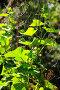 Зелёный побег огурцов на грядке с цветами и маленькими огурчиками, фото № 380988, снято 31 июля 2008 г. (c) Артём Анисимов / Фотобанк Лори