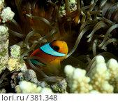 Купить «Под водой в Красном море», фото № 381348, снято 20 ноября 2007 г. (c) Tamara Sushko / Фотобанк Лори