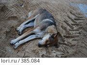 Купить «Бездомная собака на песке», фото № 385084, снято 10 июля 2008 г. (c) Kate Kovalenko / Фотобанк Лори