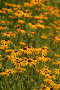 Декоративные цветы, фото № 385160, снято 24 июля 2008 г. (c) Виктор Филиппович Погонцев / Фотобанк Лори