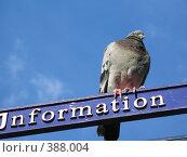 Купить «Информатор», фото № 388004, снято 10 августа 2007 г. (c) Светлана Кудрина / Фотобанк Лори