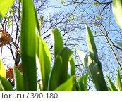 Купить «Зеленая трава на фоне синего неба», фото № 390180, снято 7 мая 2006 г. (c) Дмитрий Лагно / Фотобанк Лори