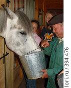 Работник конюшни поит лошадь (2008 год). Редакционное фото, фотограф Кардаполова Наталья / Фотобанк Лори