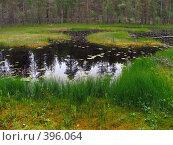 Купить «Карелия. Исчезающая лесная ламбушка (озеро)», эксклюзивное фото № 396064, снято 21 июля 2008 г. (c) Тамара Заводскова / Фотобанк Лори