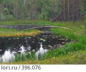 Купить «Карелия. Маленькое лесное озеро», эксклюзивное фото № 396076, снято 21 июля 2008 г. (c) Тамара Заводскова / Фотобанк Лори