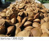 Купить «Орехи», фото № 399020, снято 10 августа 2008 г. (c) Дмитрий Иванов / Фотобанк Лори