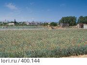 Купить «Выращивание гвоздики на Крите», фото № 400144, снято 4 мая 2008 г. (c) Галина Лукьяненко / Фотобанк Лори