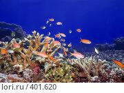 Купить «Подводный пейзаж», фото № 401620, снято 6 мая 2008 г. (c) Ольга Хорошунова / Фотобанк Лори