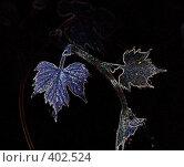 Купить «Виноградная лоза», иллюстрация № 402524 (c) Svetlana Bachkala / Фотобанк Лори