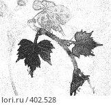 Купить «Черно-белая  виноградная лоза», иллюстрация № 402528 (c) Svetlana Bachkala / Фотобанк Лори