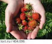 Купить «Клубника», фото № 404096, снято 2 августа 2008 г. (c) Алексей Гунев / Фотобанк Лори