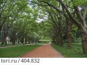 Стрийский парк, Львов, Украина. Стоковое фото, фотограф Павел Савин / Фотобанк Лори